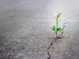 بازگشت امید به زندگی